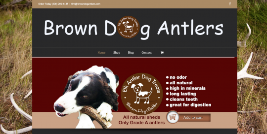 Brown-Dog-Antlers-Website